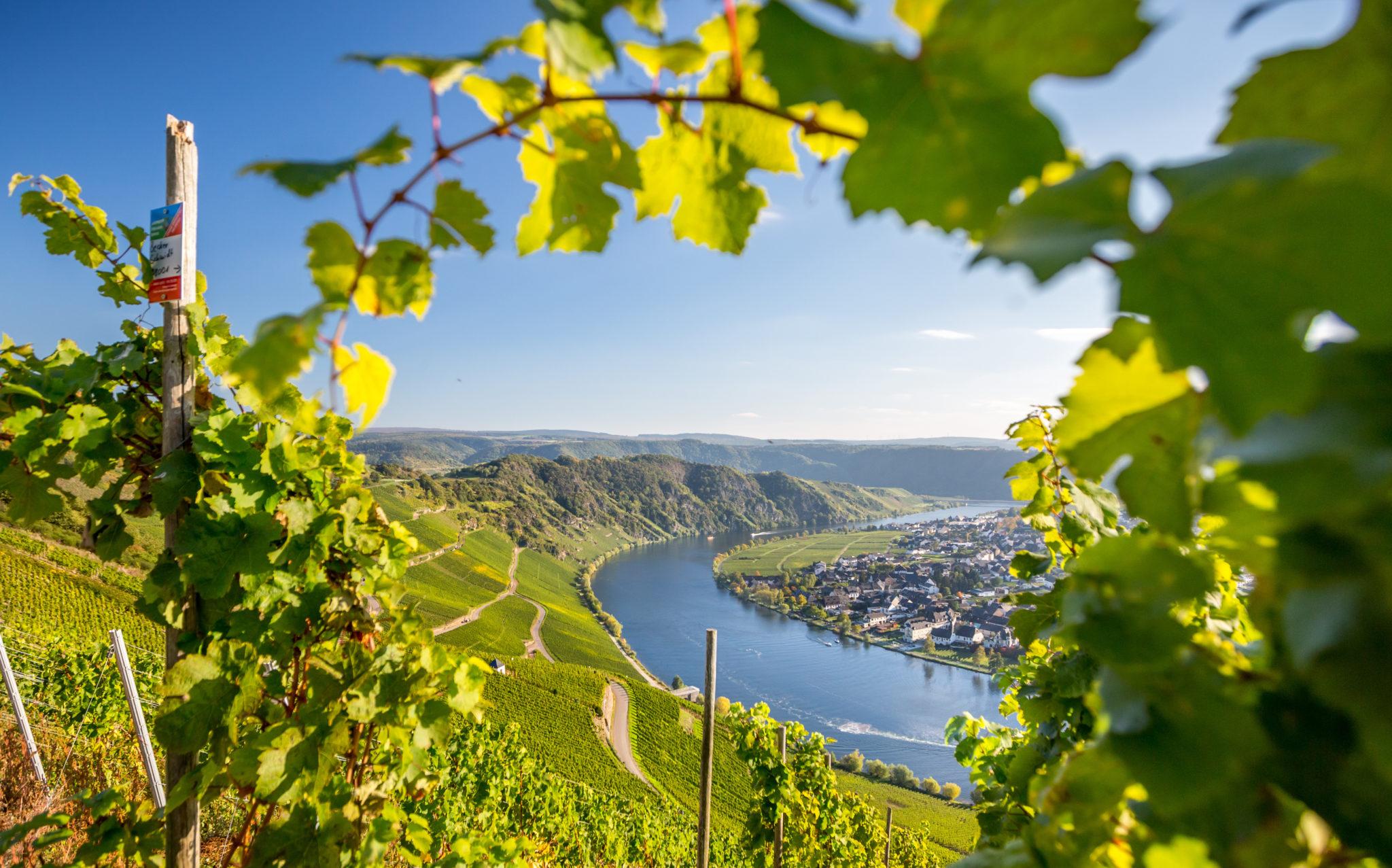 Mosel Panoramablick aus den Weinbergen