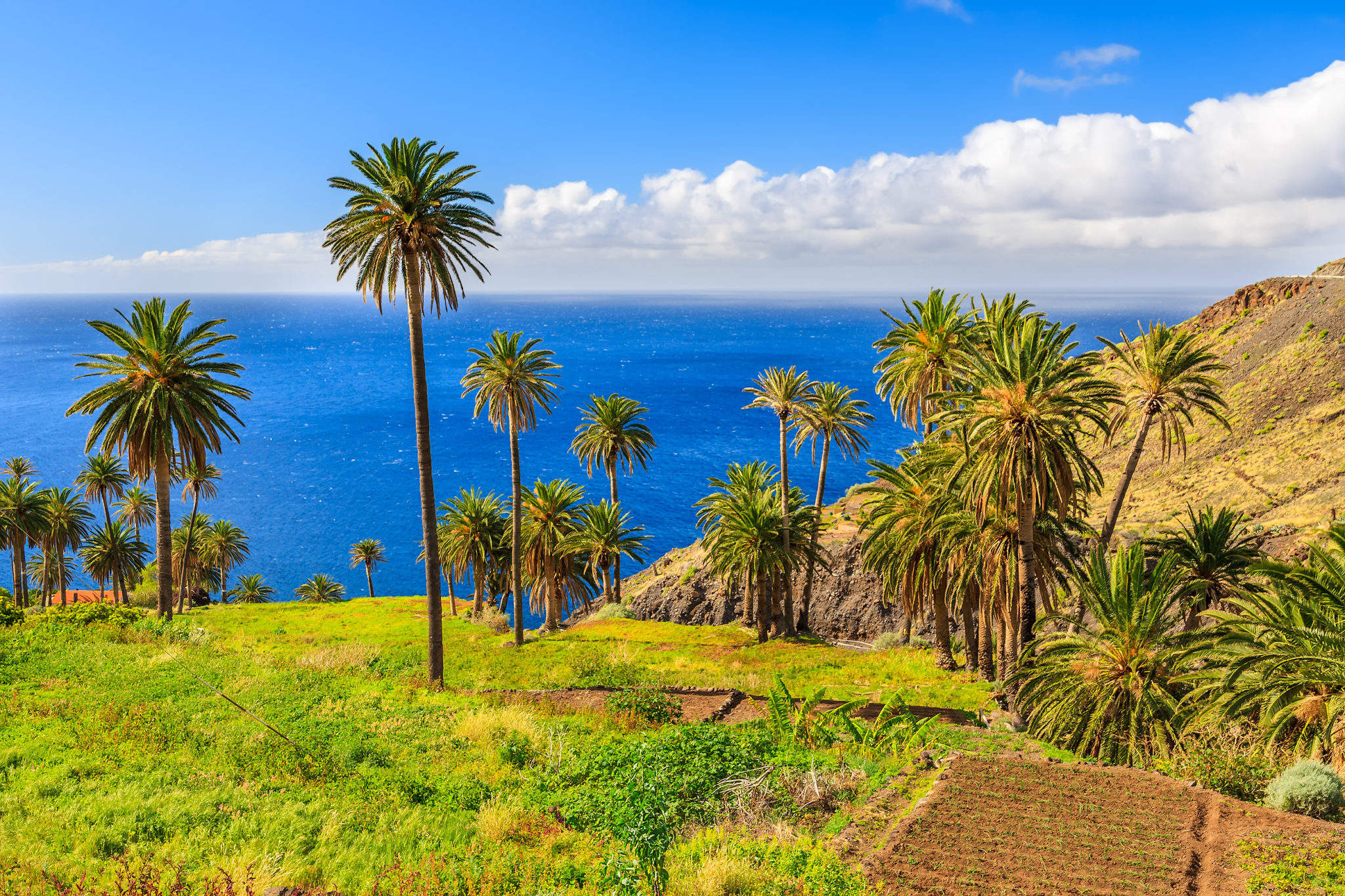 Palmen an der Küste von La Gomera