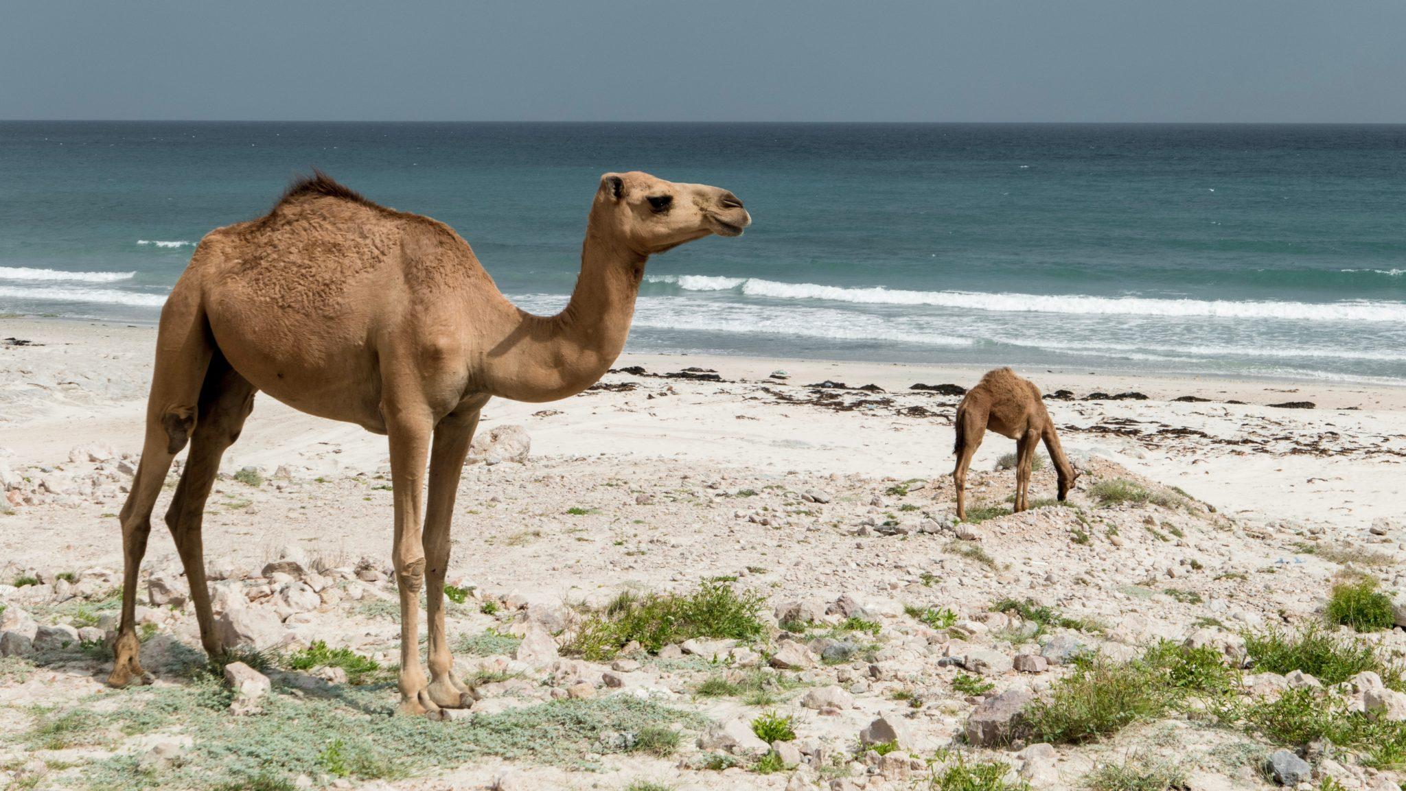 Strandleben im Oman