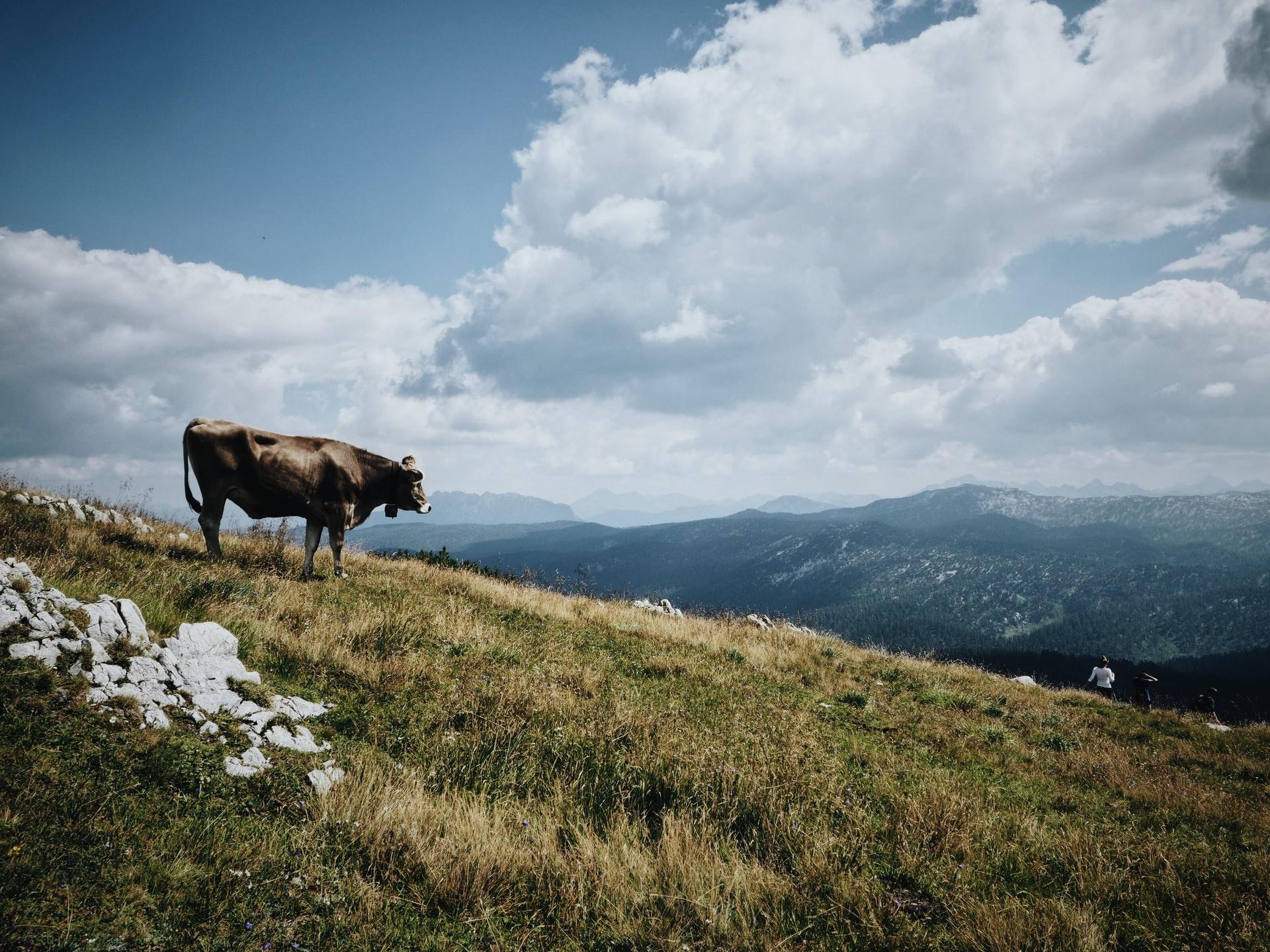 Sommerurlaub im Ausseerland in Österreich