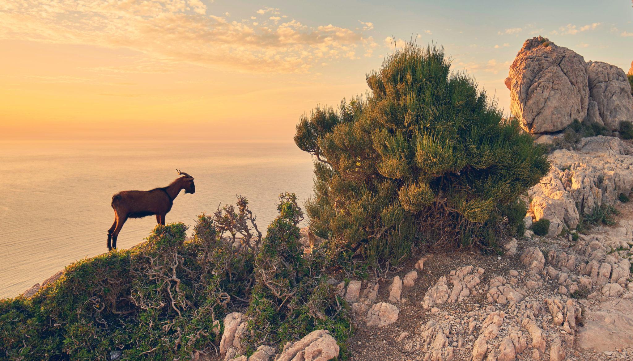 Wanderung im Sonnenuntergang auf Mallorca