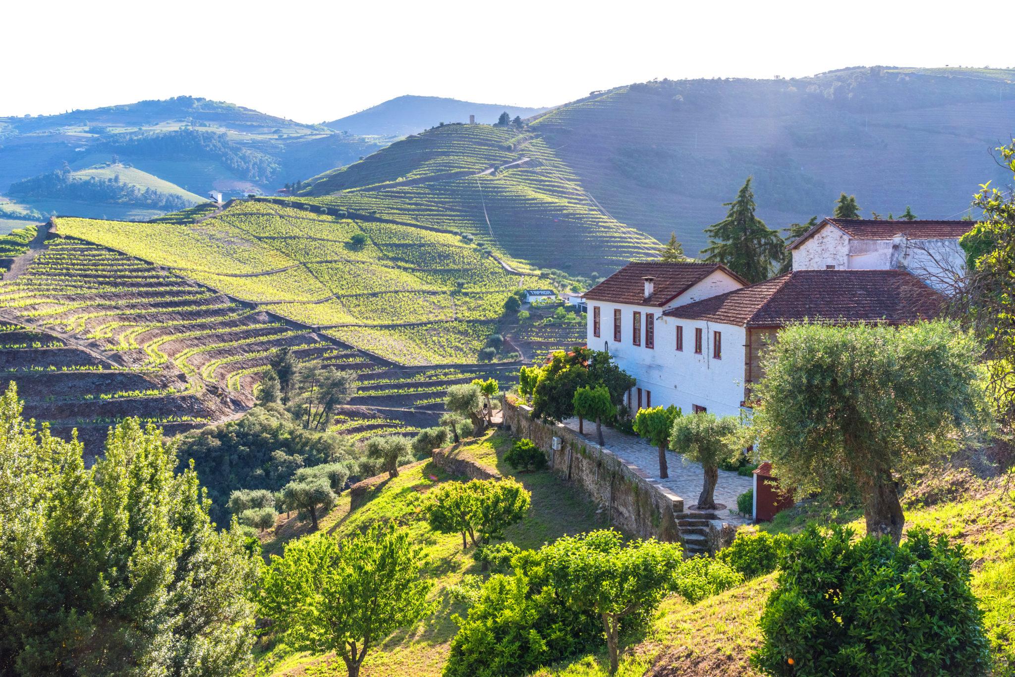 Weinreise ins Douro Tal im Norden Portugals