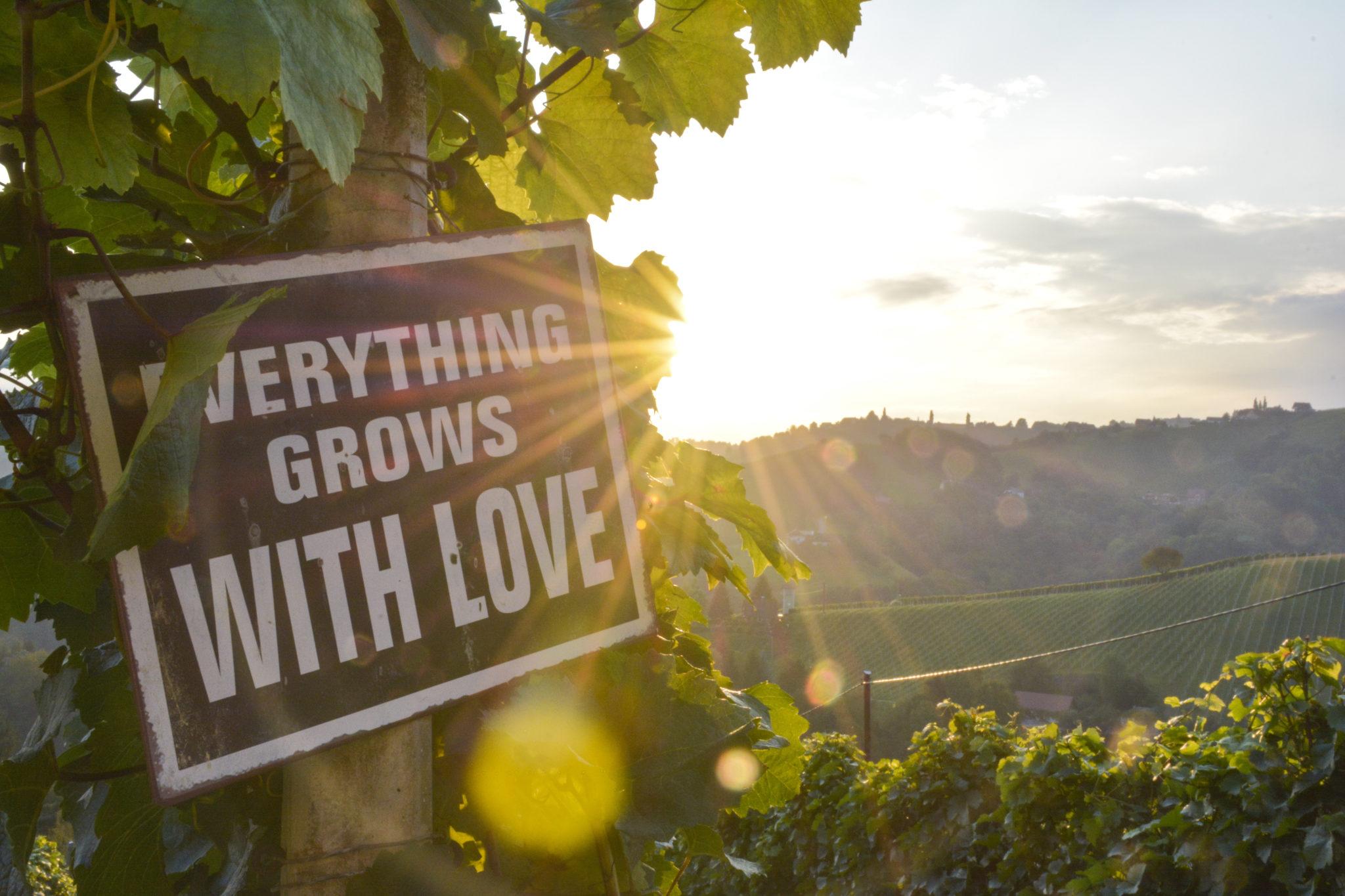 Die Top10 Tipps für Weinreisen in Europa