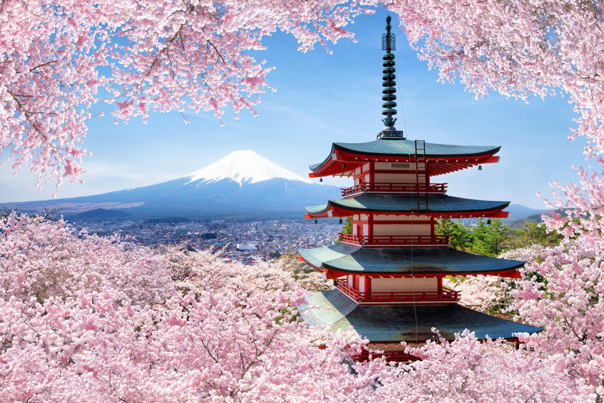 Kirschblüte an der Chureito Pagode in Fujiyoshida