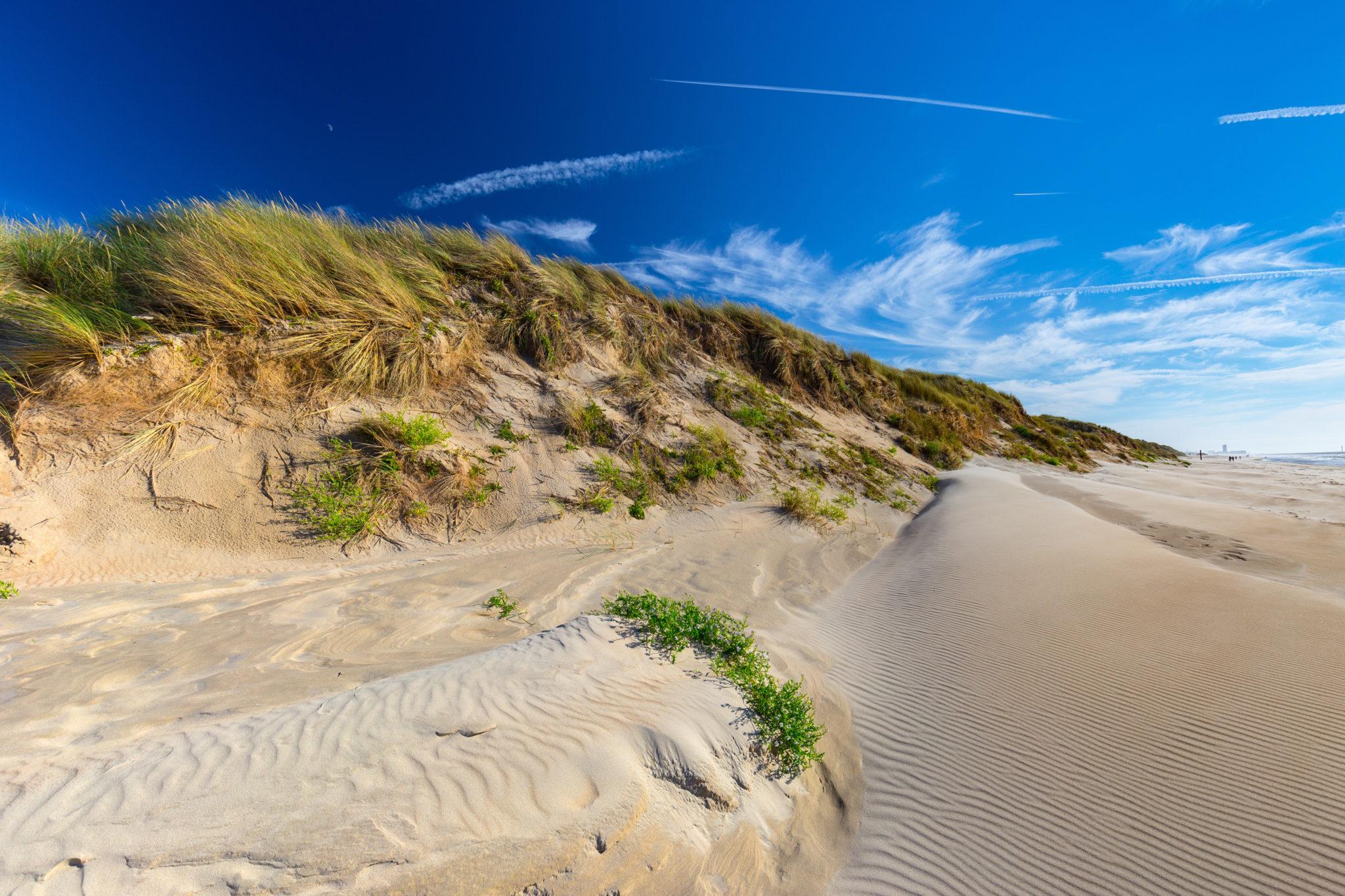 Sanddünen am Nordsee-Strand von in De Haan